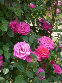 花フェスタ記念公園⑥_b0142989_0435570.jpg