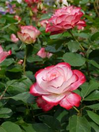 花フェスタ記念公園⑥_b0142989_0445861.jpg