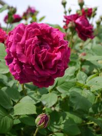 花フェスタ記念公園⑥_b0142989_0564961.jpg