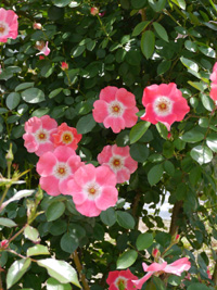 花フェスタ記念公園⑦_b0142989_18485851.jpg