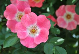 花フェスタ記念公園⑦_b0142989_18492232.jpg