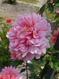 花フェスタ記念公園⑦_b0142989_18593242.jpg