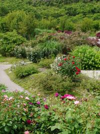 花フェスタ記念公園⑦_b0142989_1937841.jpg