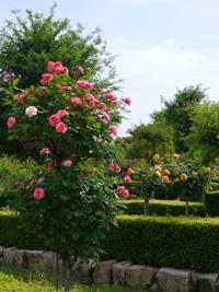 花フェスタ記念公園⑦_b0142989_19392597.jpg