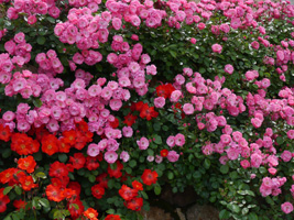 花フェスタ記念公園⑦_b0142989_19411975.jpg