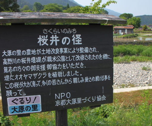 大原桜井の径_e0048413_20425020.jpg