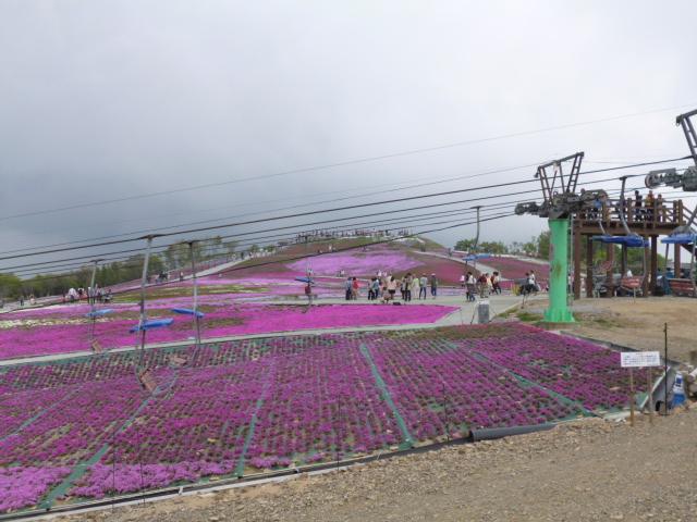 芝桜見に行きました★in茶臼山 (^‐^)ゝ_c0213517_12171119.jpg