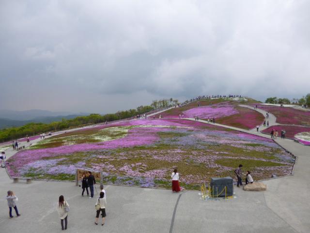 芝桜見に行きました★in茶臼山 (^‐^)ゝ_c0213517_12173047.jpg