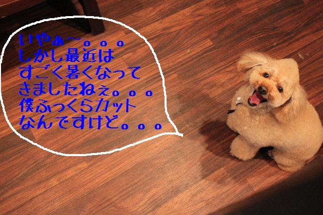 b0130018_951473.jpg