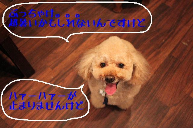 b0130018_9515368.jpg
