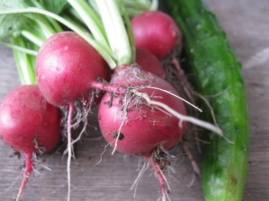 今年「初収穫」です♪_a0125419_926429.jpg