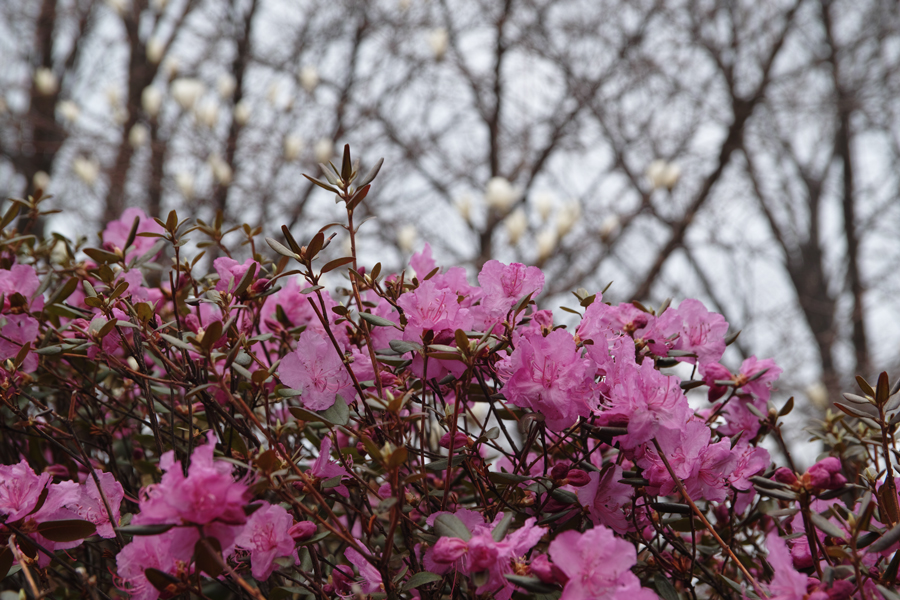 西岡公園(札幌市豊平区)_c0223825_2263324.jpg