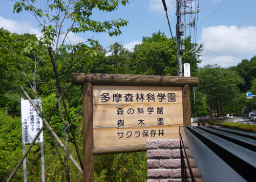 ヒメアカガシ_c0177135_14551289.jpg