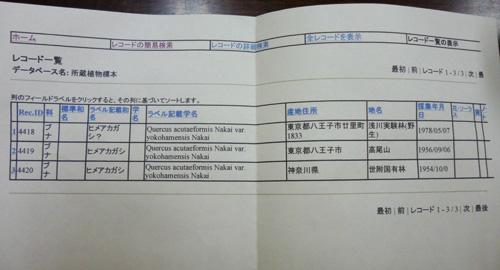 ヒメアカガシ_c0177135_20551391.jpg