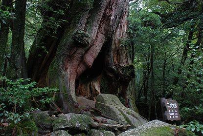 月末の雑感 ~まっくら森の歌~_e0030537_058343.jpg