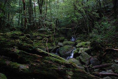 月末の雑感 ~まっくら森の歌~_e0030537_10069.jpg