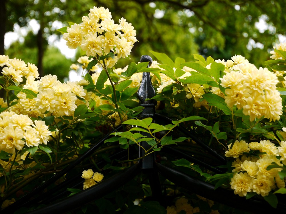 和歌山県植物公園緑花センター _b0093754_21261283.jpg