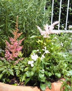 The Garden!  Vol.4_a0229658_20282537.jpg