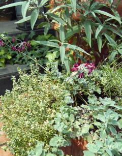 The Garden!  Vol.4_a0229658_2029844.jpg