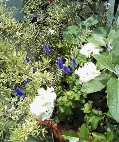 The Garden!  Vol.4_a0229658_20313041.jpg