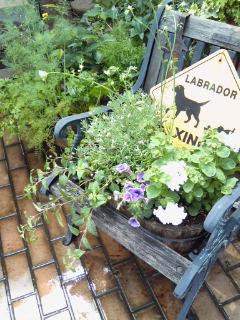 The Garden!  Vol.4_a0229658_20454267.jpg