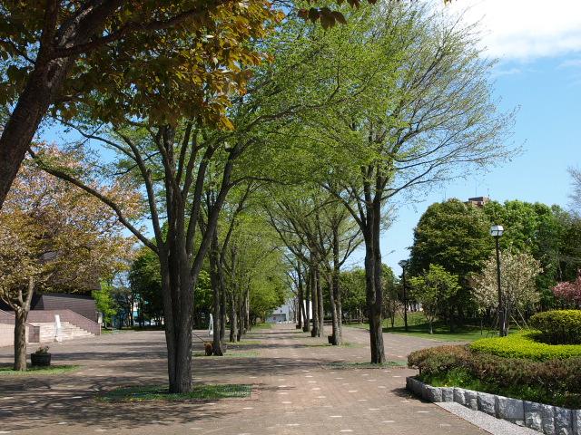 市民文化公園 5月_d0153062_8241960.jpg