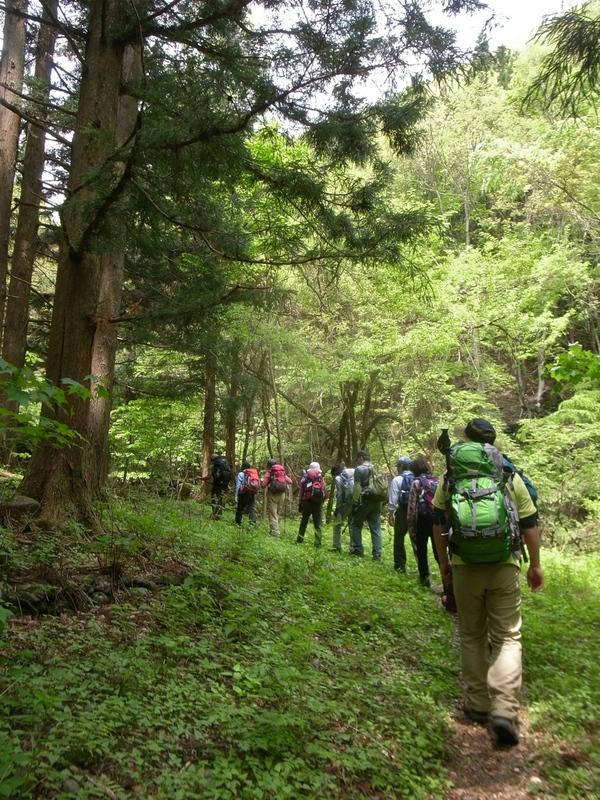 5月20日 シオジ原生林ハイキング レポート_b0209774_23202356.jpg