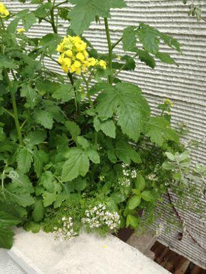 植物が生き生き!_c0204289_16313678.jpg