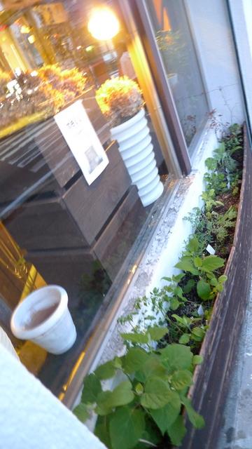 外の花壇_b0171193_22352158.jpg