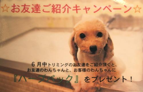 6月限定キャンペーン♡_d0060413_12375099.jpg