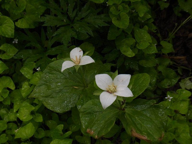 神戸から恵迪の森へ_c0025115_1949418.jpg
