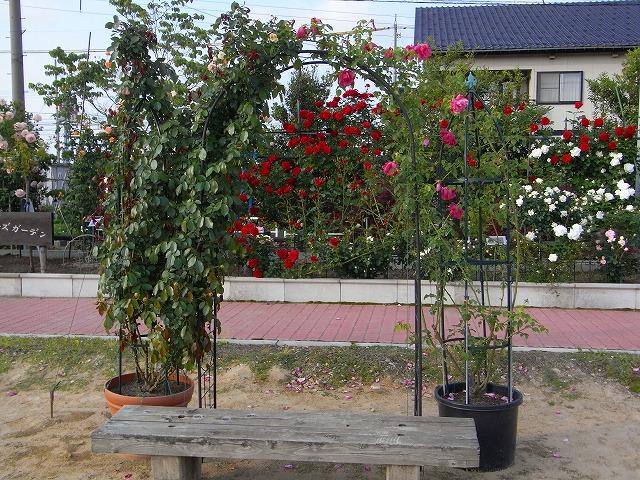 2012春いみずバラ祭り_c0194417_11355791.jpg
