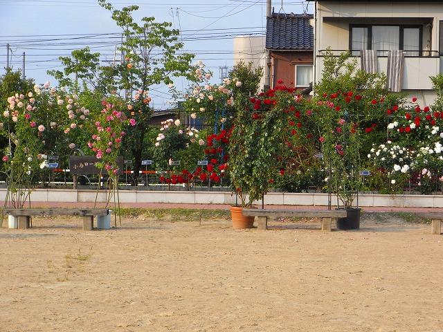 2012春いみずバラ祭り_c0194417_11374370.jpg