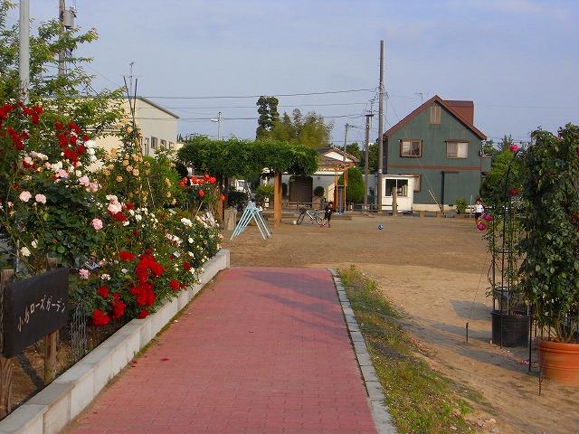 2012春いみずバラ祭り_c0194417_11382629.jpg