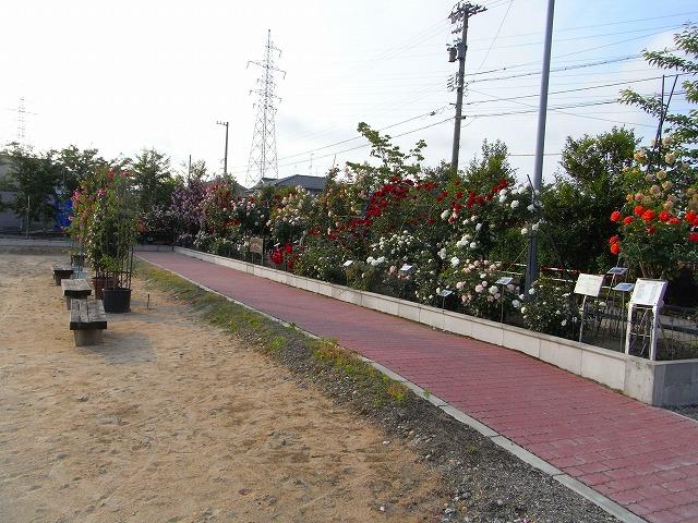 2012春いみずバラ祭り_c0194417_11425075.jpg