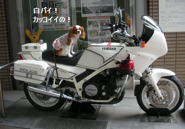 f0214121_22211255.jpg