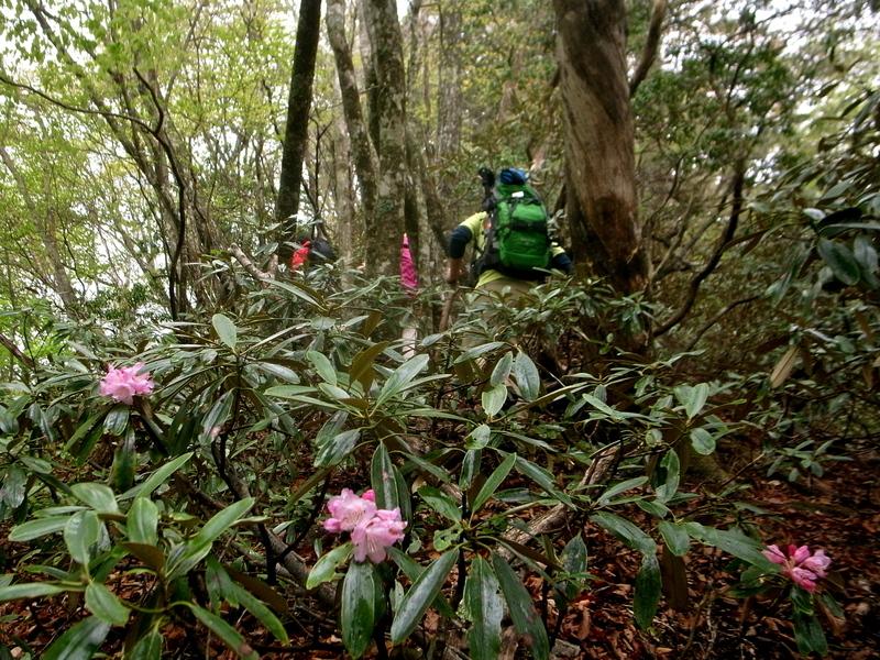 5月20日 シオジ原生林ハイキング レポート_b0209774_0241871.jpg