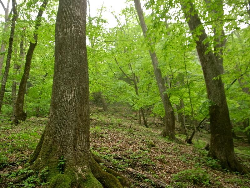 5月20日 シオジ原生林ハイキング レポート_b0209774_092959.jpg
