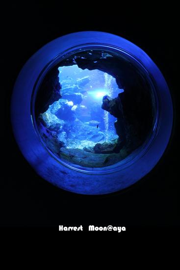 地球のような水中_b0208495_22582787.jpg