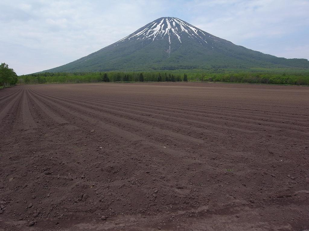 ニセコでワラビ採り_f0138096_2123297.jpg
