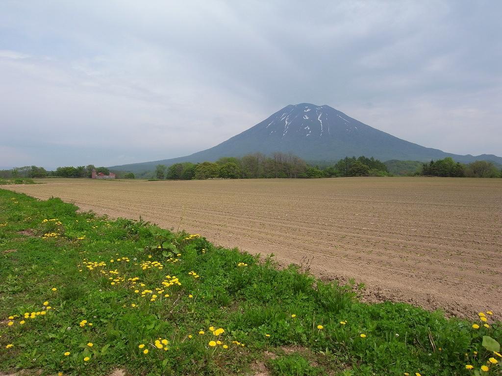 ニセコでワラビ採り_f0138096_21234089.jpg