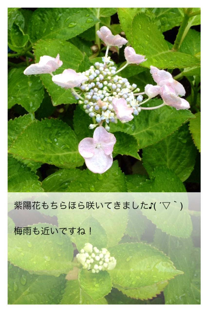 c0197508_10192642.jpg