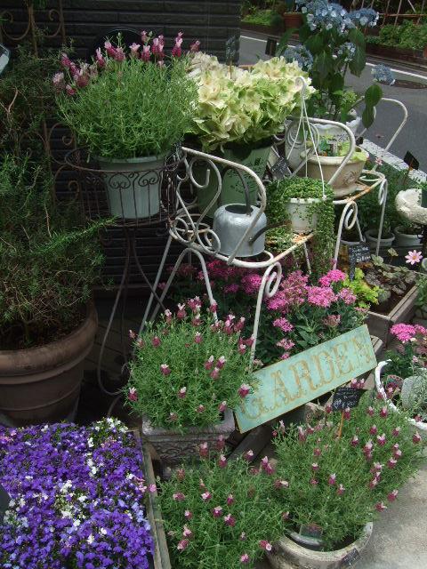 オークリーフ(今日おすすめのバラの花たち)_f0049672_13551817.jpg