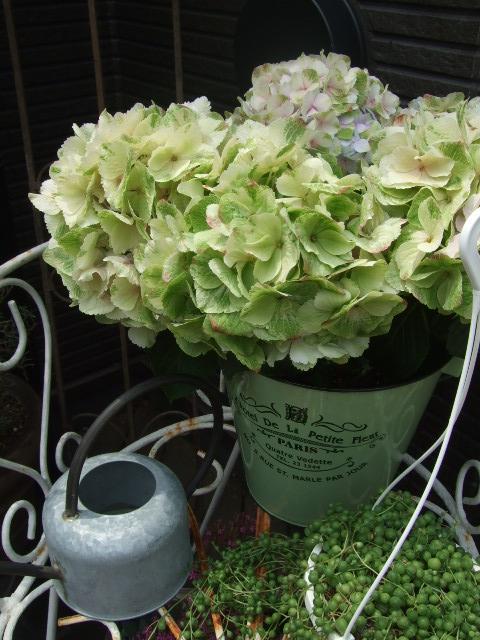 オークリーフ(今日おすすめのバラの花たち)_f0049672_13554297.jpg