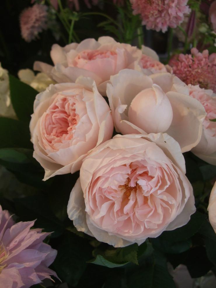オークリーフ(今日おすすめのバラの花たち)_f0049672_1441829.jpg