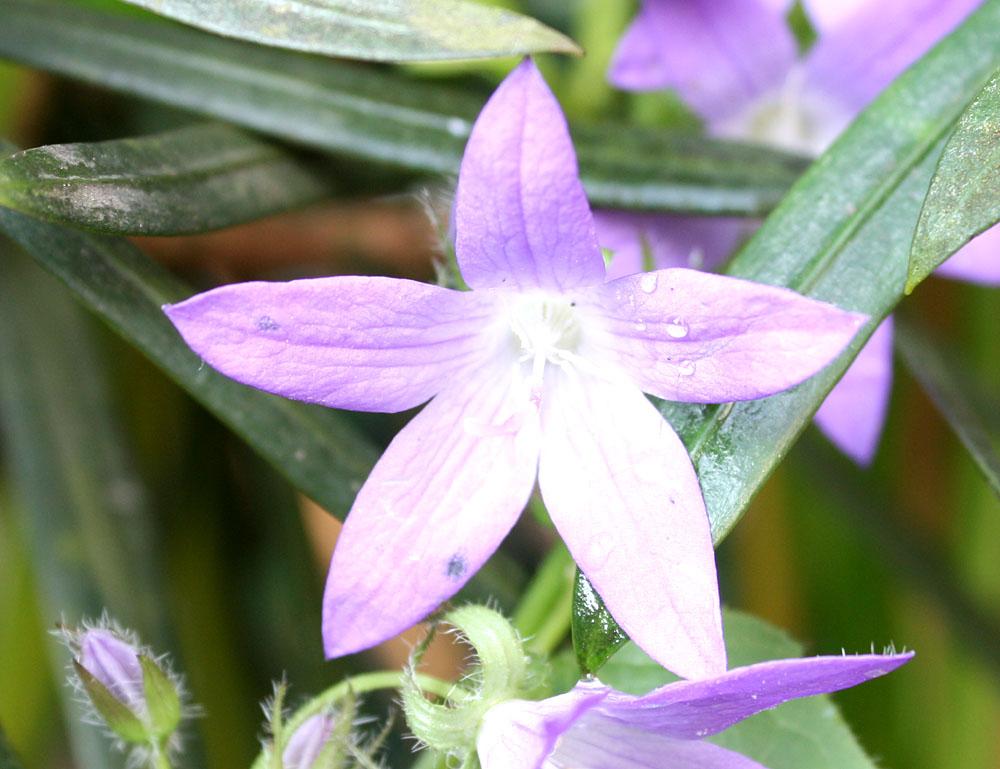 裏庭に咲く花_b0114798_9191553.jpg