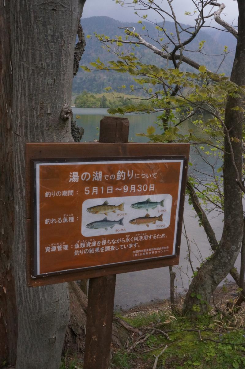 湯ノ湖でガッ釣り_c0095801_10493931.jpg