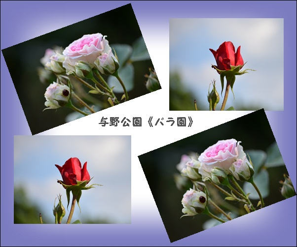 c0223117_1359248.jpg