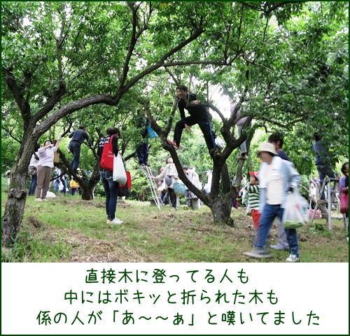 神崎梅園梅ちぎり_e0072023_16335369.jpg