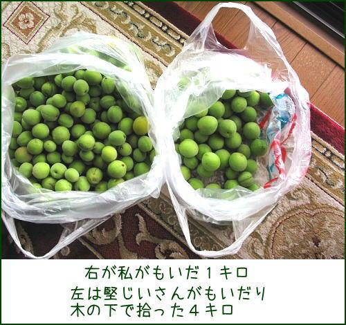 神崎梅園梅ちぎり_e0072023_164793.jpg